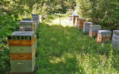 Bizz d'abeilles